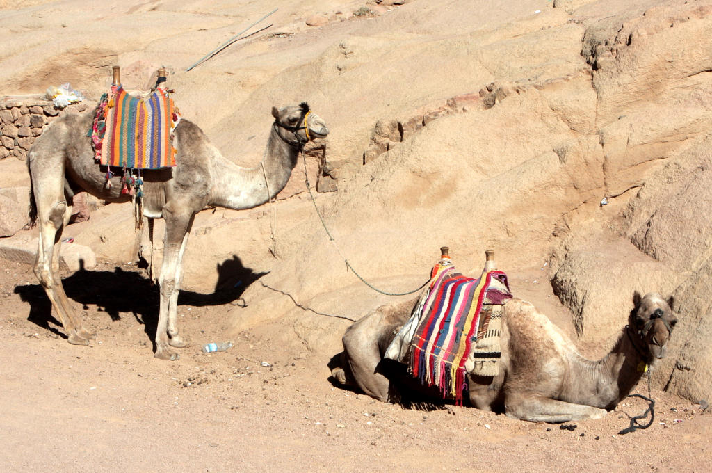 Taxi service, Mt Sinai