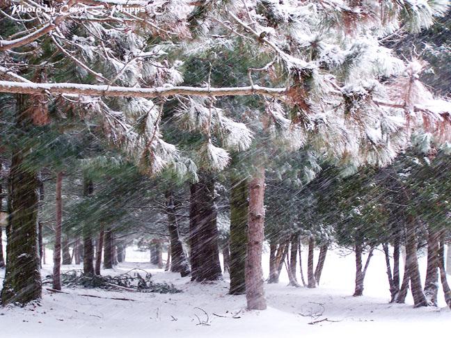 Windy, Snowy Madison.