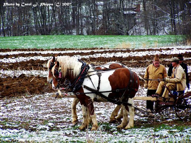 Working Draft Horses WV.