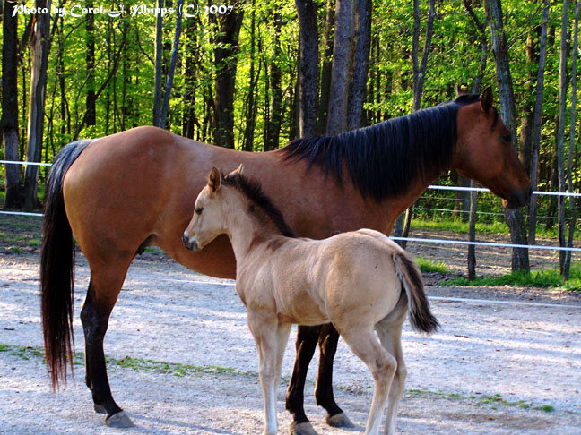 Proud Mother and Filly!