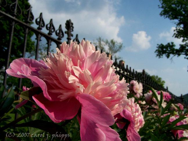 Lanier Mansion Garden.