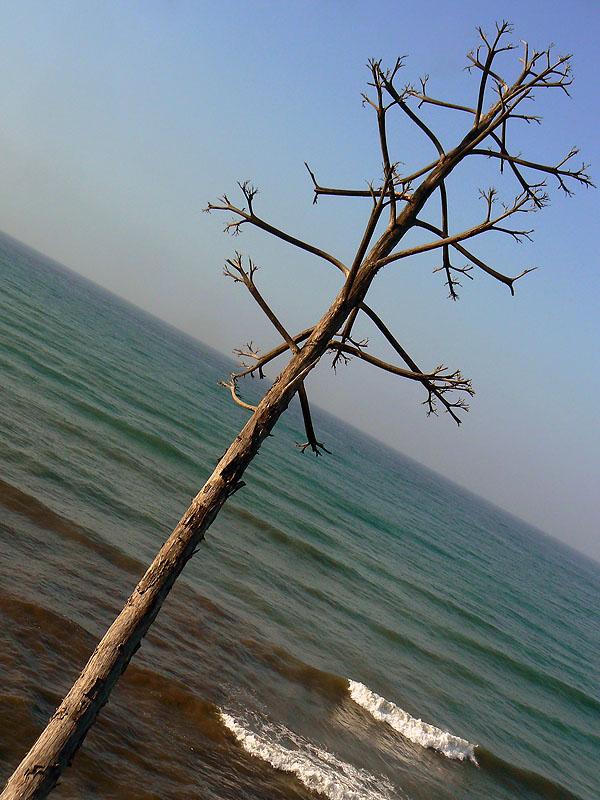arbol y mar