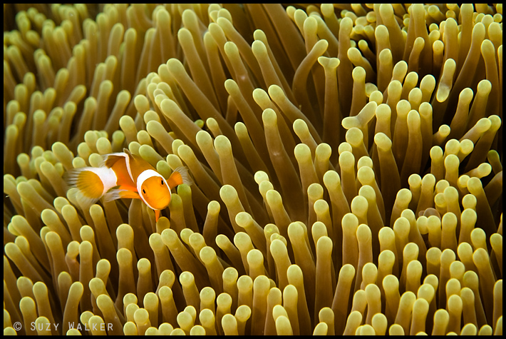 nemo on yellow
