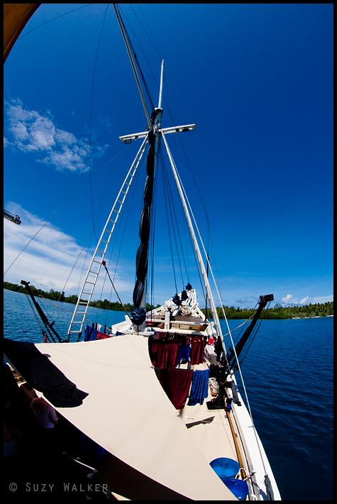 Seven seas bow