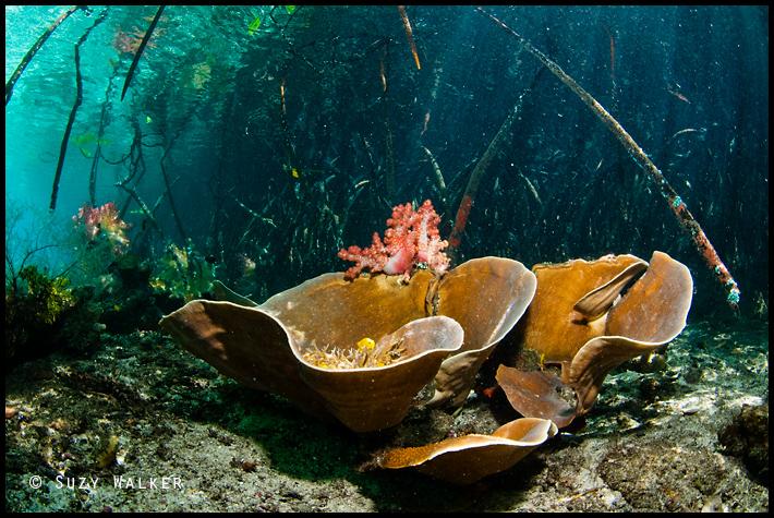 Yellow fish and coral