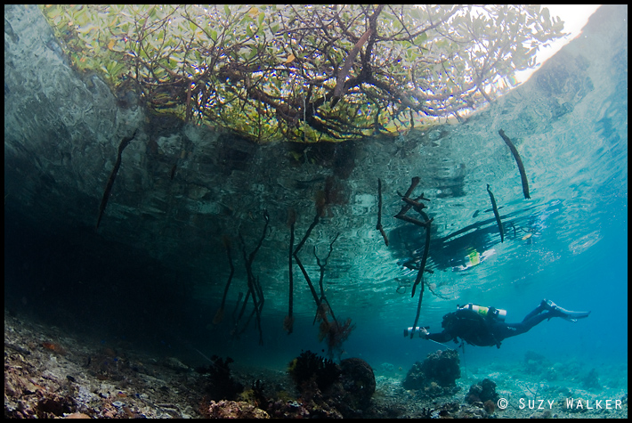 Mike explores the mangroves with his video