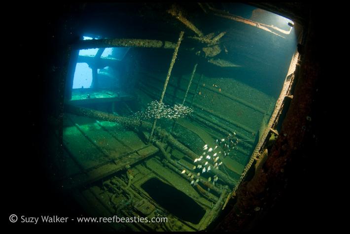 Ghannis D Engine room