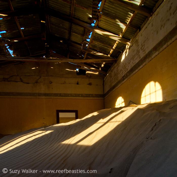 Kolmanskopp