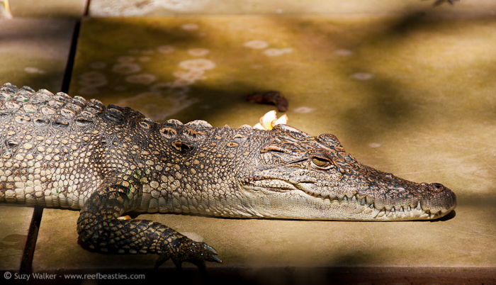 Hotel Croc