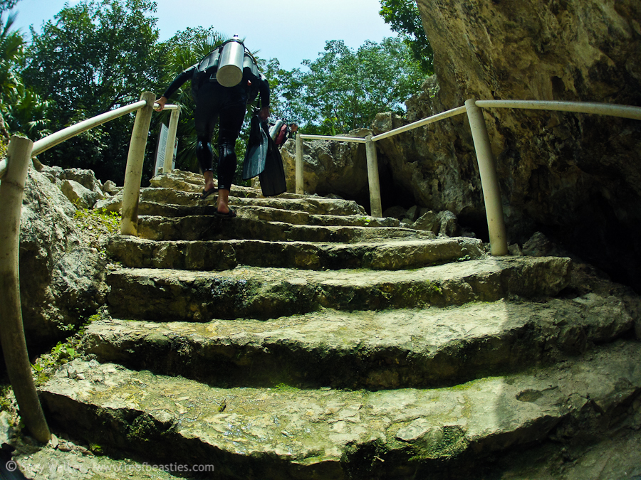 Steps from Little Brother Cenote