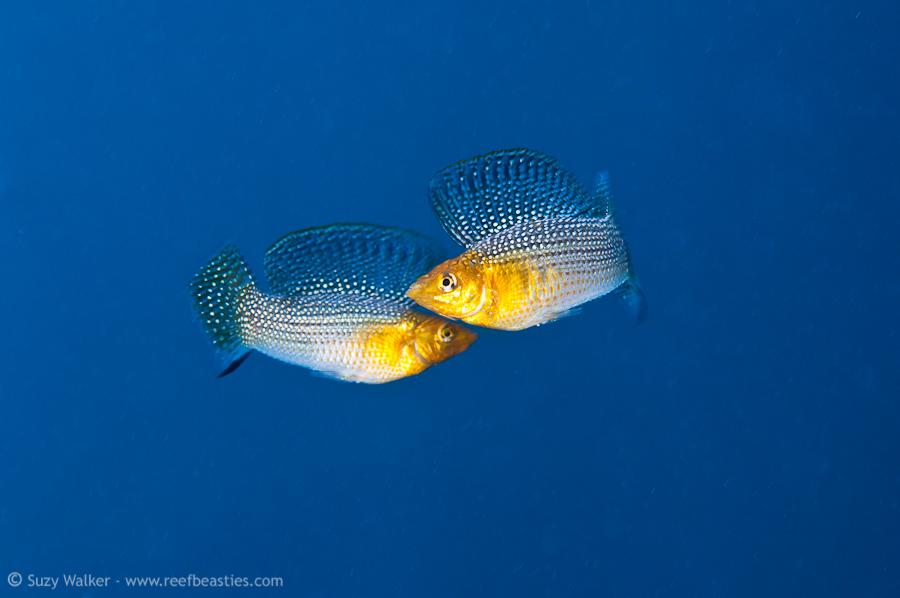 Eden Cenote fish fight
