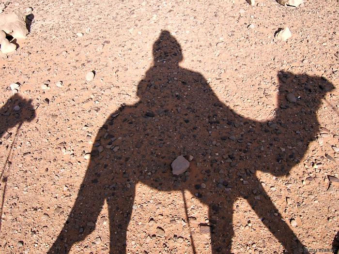 Shadow Camel, Jordan