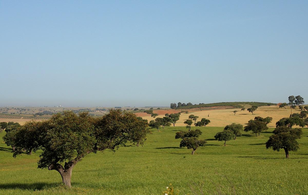 Castro Verde Landscapes