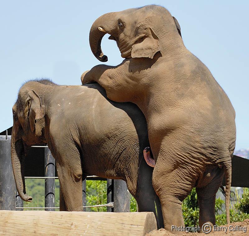 Elephant Free Sex Videos