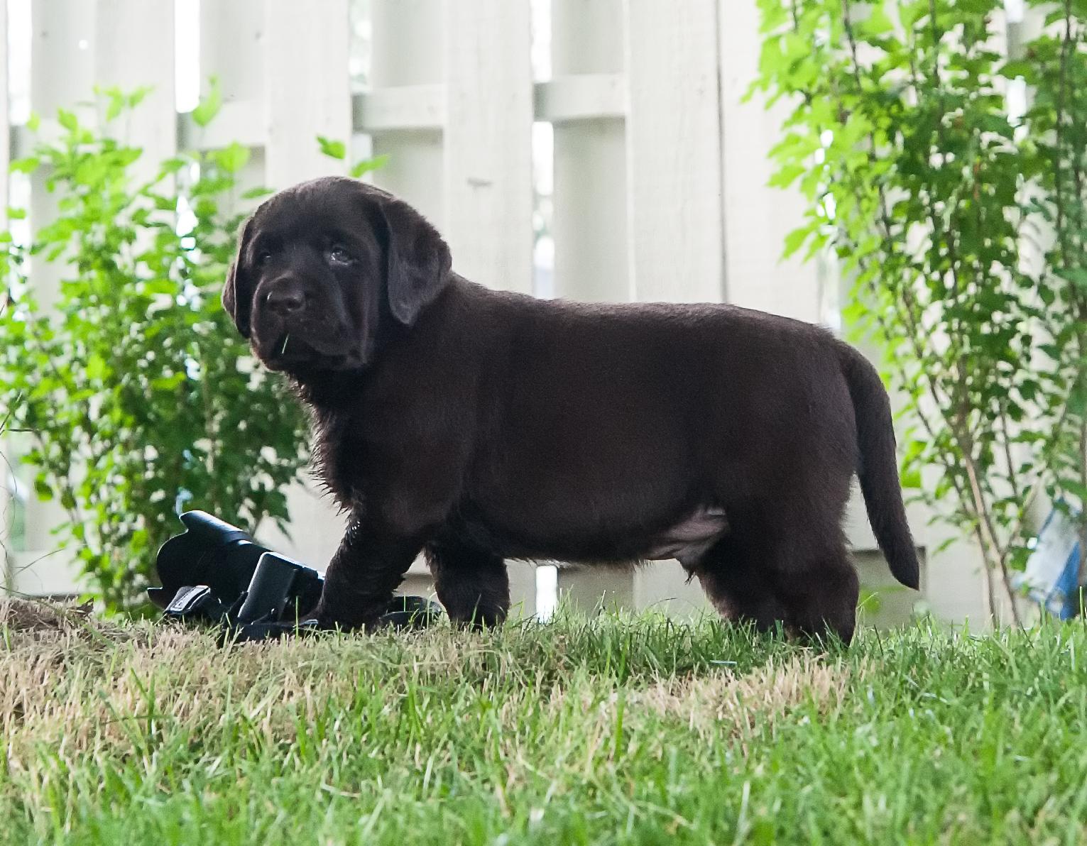 The special boy puppy   June 24 2012.jpg