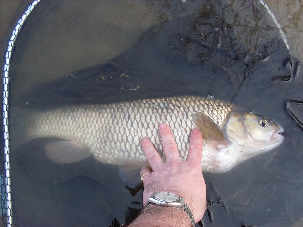 Pack of 30 Artificial Fishing Baits Roach Dace *Perch Barbel Carp etc Chub