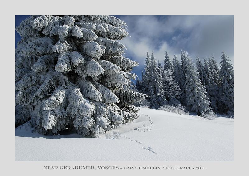 Vosges, near Gerardmer 2