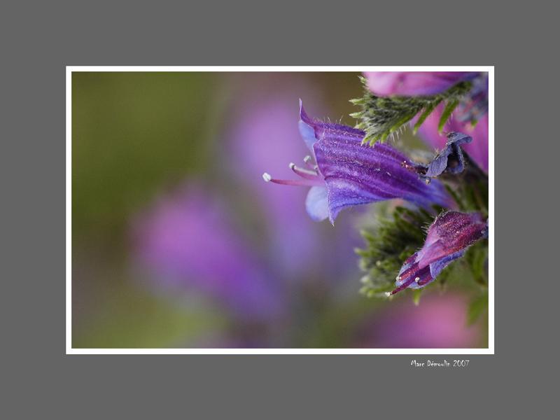 Floral 51