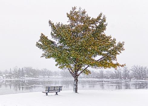 Snowfall On The Canal 20101206