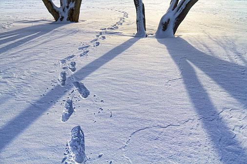 Tracks & Shadows 20120114