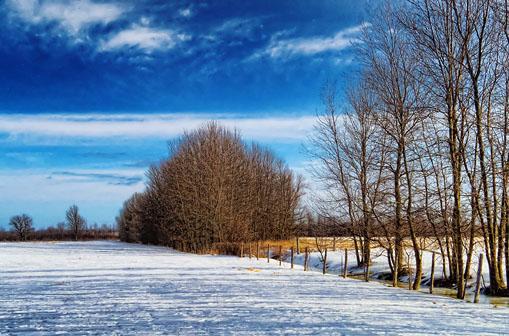 Snowscape 20120125