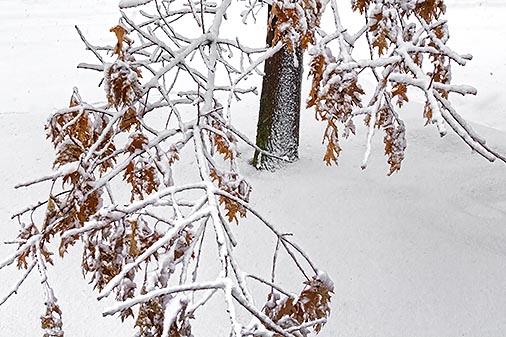 Clinging Snow 33823
