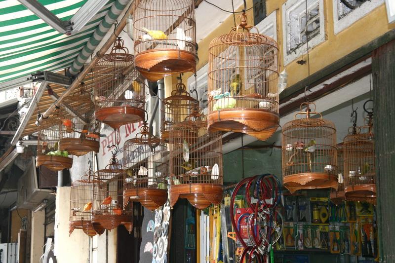 La boutique de loiseleur - Hanoi