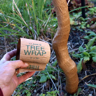 Wrapping up for winter gardening - Protecting fruit trees in winter ...