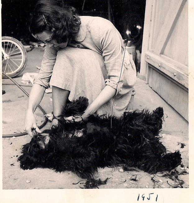 granny gives dog a haircut