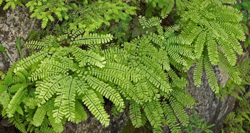 Ferns at Quarry