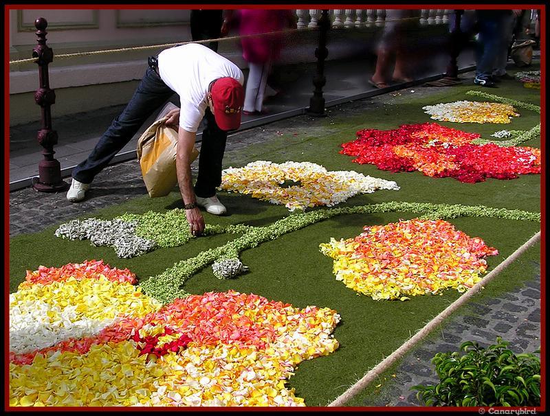 flower carpet, alfombrista