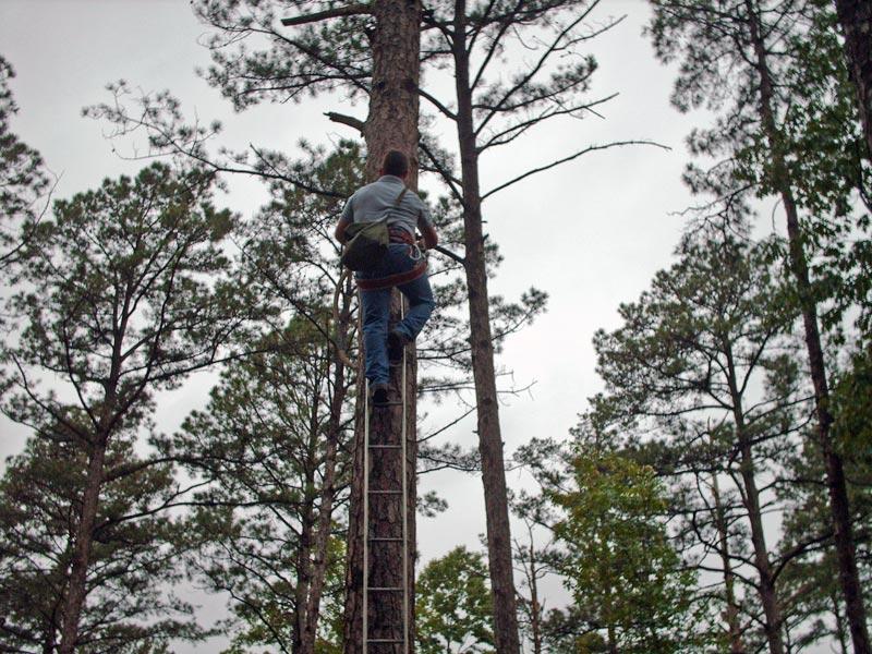 Woodpecker management demonstration