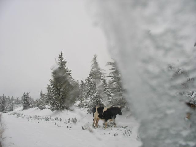 صور الثلوج في ليبيا  93134917