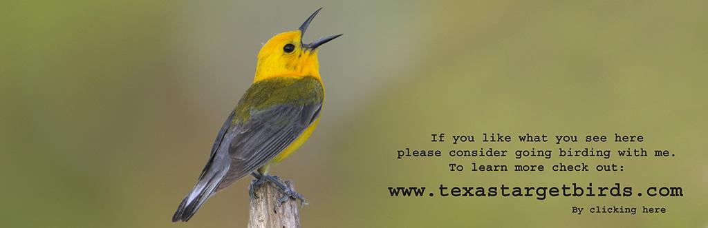www.texastargetbirds.com