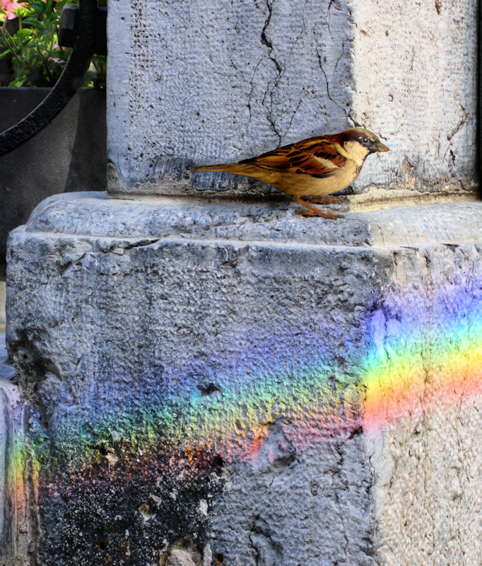 Rainbows might be very shy when they are small...