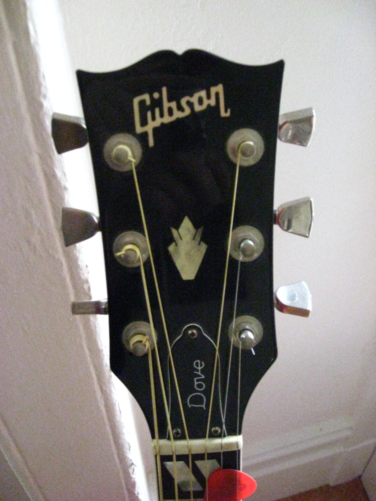 1976 Gibson Dove - headstock front