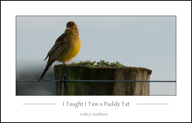 I Taught I Taw a Puddy Tat