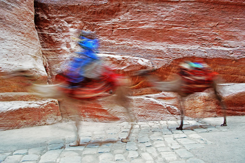 Camels on the move.jpg