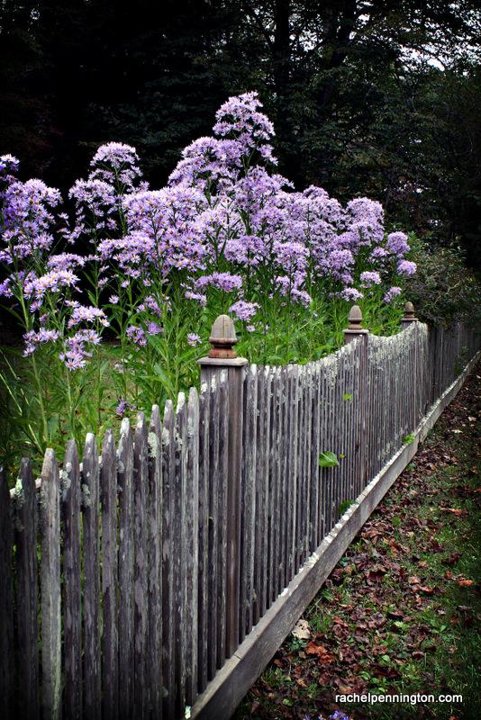 Flowers At Kingstone Lisle