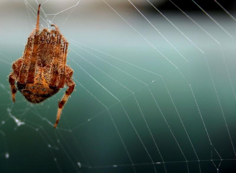 Spider Between Spokes