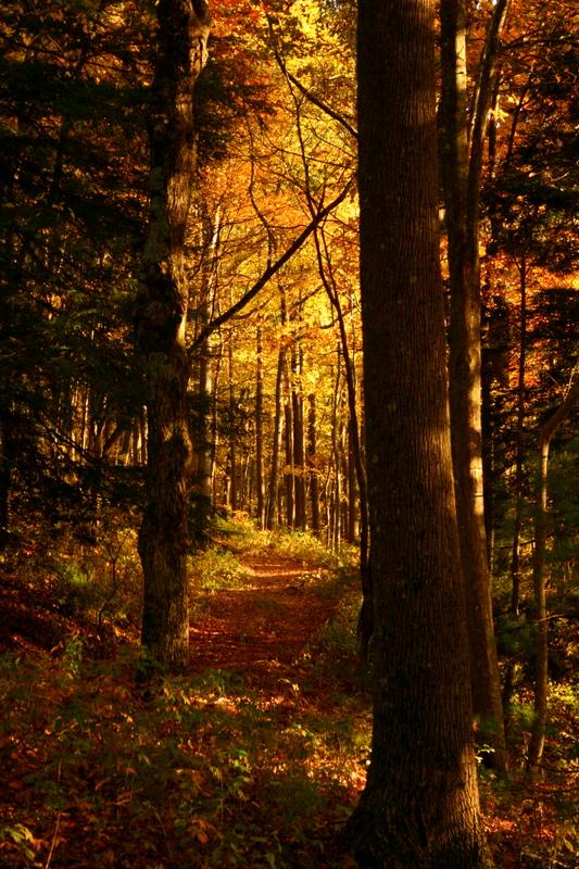 Cohutta Trail
