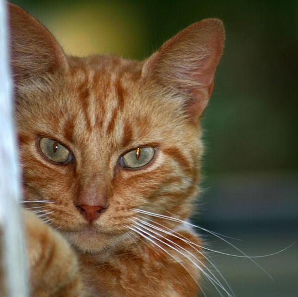 Hobbes Glares