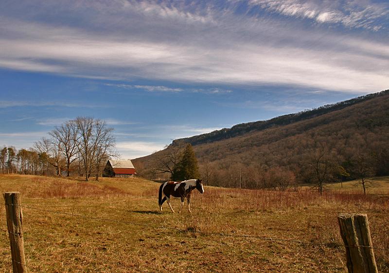 Fox Mountain Farm