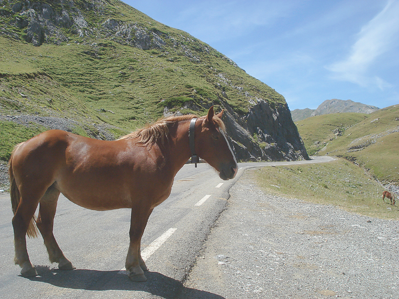 Horse in the Pyrenees