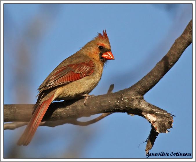 Identification d'oiseaux Original