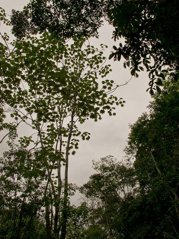 Iquitos_00044.jpg