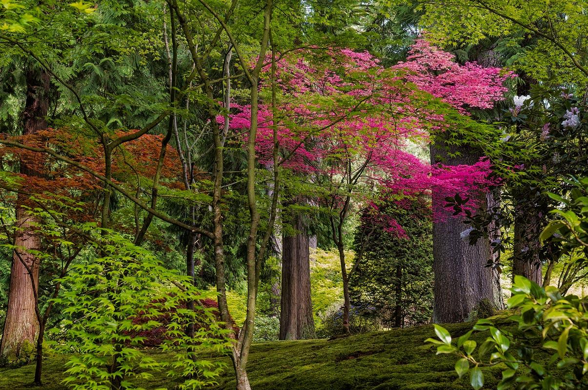 Three recent shots from Portland Japanese Garden