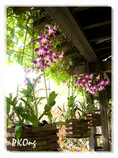 Orchids from roof.jpg