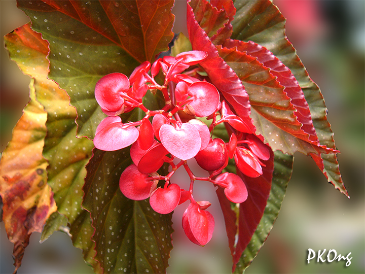 Red small flowers.jpg