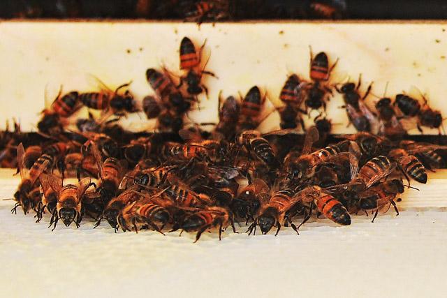 Orderly Bee-havior